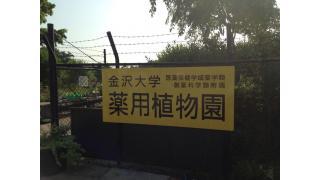 【金沢大学】薬用植物園に行ってきた