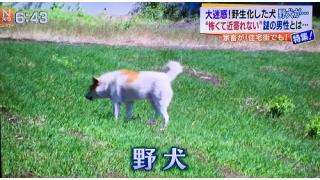 THE大喜利ランキング ~ダイジェスト記事~【Season.5-1】