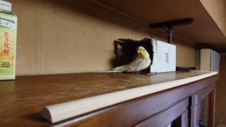 破壊された本棚の上の秘密基地