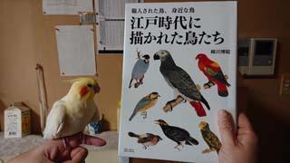 書籍「江戸時代に描かれた鳥たち」
