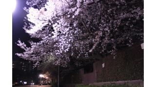 王子動物園、桜の通り抜け。