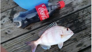 久々に釣りに行ってきたよ~!