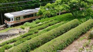 飯田線とお茶畑