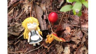 その7:秋キノコダイナマイト(前編)