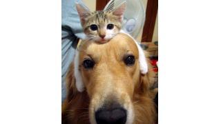 あなたは【イヌ派?】【ネコ派?】イヌ好きネコ好きにみる性格診断