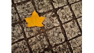 丸の内らへんの秋