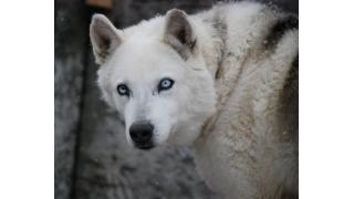 大相撲初場所の番付を眺めるイヌ