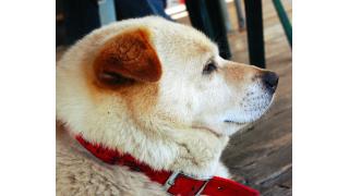 ジャーキーを1万円で売る犬