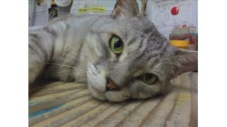 猫の写真を使った動画をみんなで作ろう・・・という計画をしています