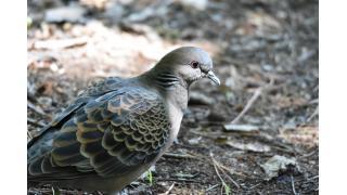 今年撮影した野鳥の写真