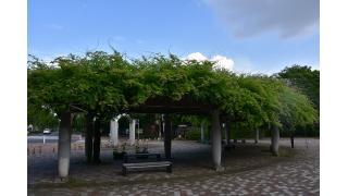 東京都練馬区大泉中央公園及び埼玉県和光市和光樹林公園のベンチ