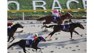 【フェブラリーS+α】競馬新聞の予想 マークが付いている馬全部3連複BOXで買えば10,000円で一日遊べる説(西スポ編)