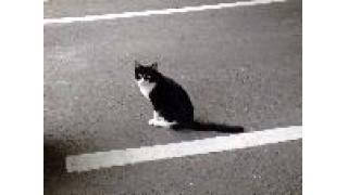 猫が道路に急に飛び出してくるワケ