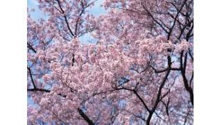 【そんなに見たい?】「花見でイラッとすること」ランキングが発表wwwwww