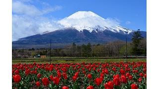 富士山に登山してきました。