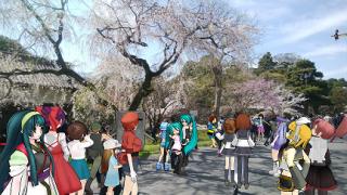皇居の桜(乾通り一般公開)