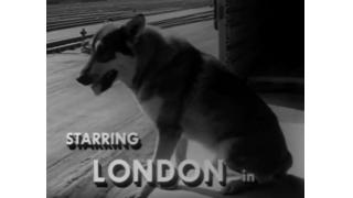 名犬ロンドン