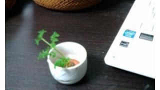 植物に関する話題