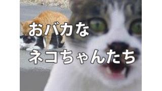 【腹筋崩壊】おバカだけどかわいいネコ画像