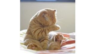 とにかく眠い!目を隠して眠るネコちゃんたち