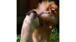 ネコにケンカを売られた犬がまさかの…【腹筋崩壊】
