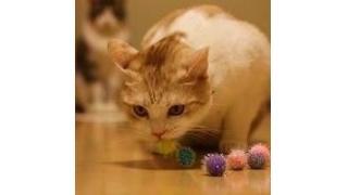 猫が喜ぶおもちゃの数々