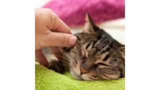 撫でてた猫が突然ネコパンチしてくる理由