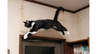猫の運動能力がすごすぎる