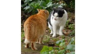 猫はなぜケンカするの