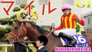 【競馬】京都 マイルCS(G1)【おみくじ感覚】