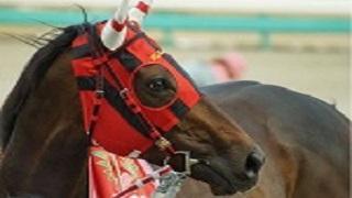 競馬『血統表の見方&馬券に対する血統の考え方』(牝系 クロス 勉強)