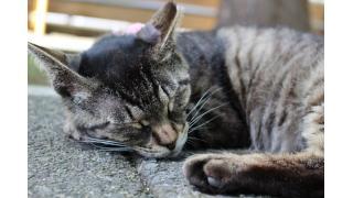 都会の結界猫