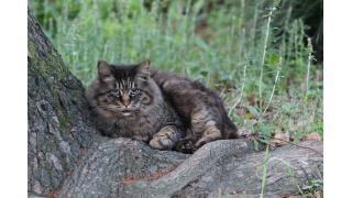 日比谷公園で狸の様な猫に会った・・・