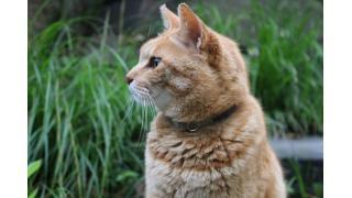 清原(猫)と桑田(猫)・・・そして茶トラ(猫)