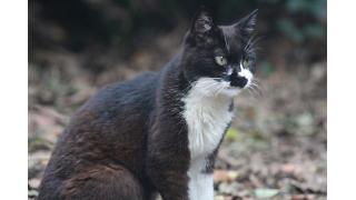 日比谷公園オールスターズ(猫)