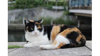 ネコの極み乙女
