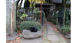 都内随一の猫神社(前編)