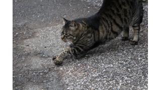 都内随一の猫神社(後編)