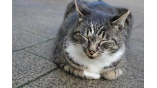 【速報!】単独猫写真展デビューが決定しました!!!