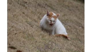 千葉屈指の猫寺へ行ってみた