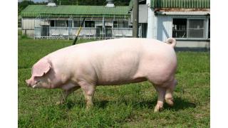 豚肉という恐怖の塊