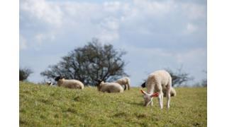 言論の自由と仕返し理論と彷徨う子羊