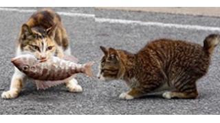 主の祈り 「魚と猫」