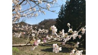 夏井川渓谷キャンプ場(3回目)、ソロキャン1日目