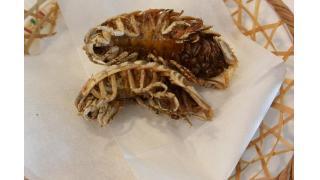【動画あり】オオグソクムシを食べに行ってきた【レポート】