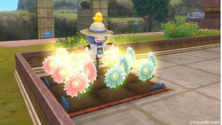 コーラルマリーとダークプラムの謎 -花の値段