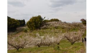 春の訪れ 梅林に行ってきました