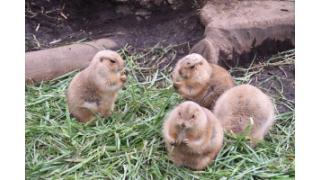 上野動物園にて(注意:パンダはいません)