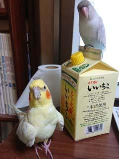 いいちこインコ&チュンの飼育日記