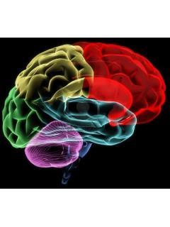 game脳